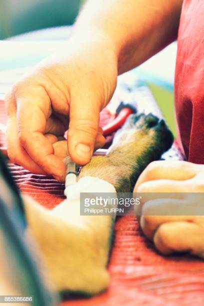 france, veterinary clinic. dog. - eutanasia fotografías e imágenes de stock