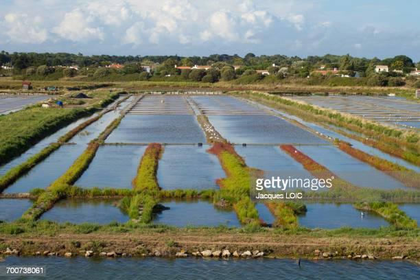 France, Western France, Noirmoutier island, Noirmoutier-en-lile, salt evaporation pond