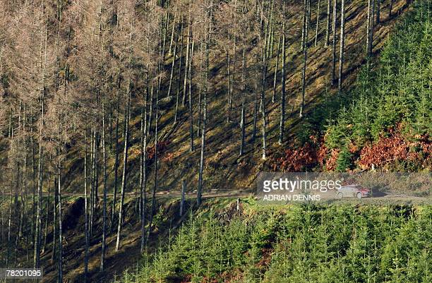 France's Sebastien Loeb drives out of the forest in his Citroen C4 during Stage 7 near Llandovery during the Wales Rally GB 01 December 2007 France's...