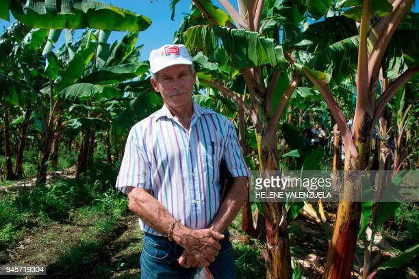 Francis Lignieres president of banana producers in Guadeloupe poses for a picture at the plantation of the SCA Blondinière fruit production company...
