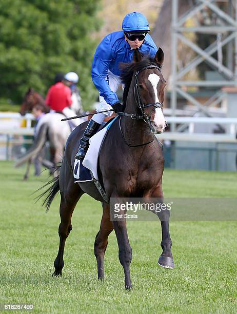 Francis of Assisi ridden by Kerrin McEvoy on the way to the barriers prior to Jayco Bendigo Cup at Bendigo Racecourse on October 26 2016 in Bendigo...