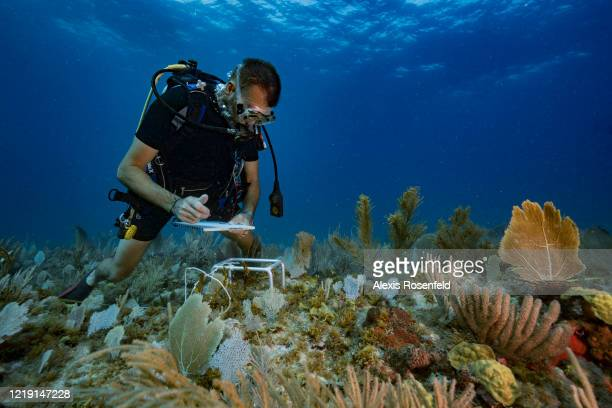 Franck Roncuzzi, a member of the French Agency for Biodiversity and head of environmental police who works at the Marine Natural Park of St. Martin...