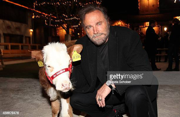 Franco Nero with a calf during the Opening of the Gut Aiderbichl Christmas Market on November 11 2014 in Henndorf am Wallersee Austria