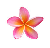 Frangipani - clipping path included
