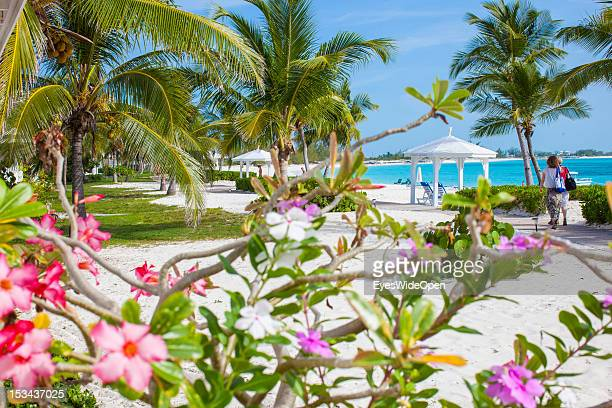 Frangipani flowers at the beach of luxury Resort and Hotel Cape Santa Maria which is having one of the Bahamas´ best beaches with white sand and...