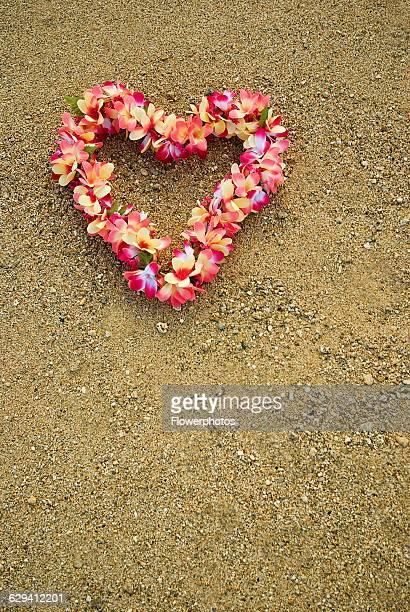 Frangipani / West Indian jasmine / Monoi Plumeria cultivar