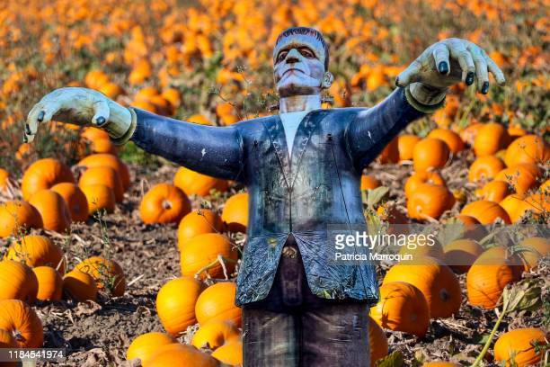 frankenstein monster in a pumpkin patch - frankenstein imagens e fotografias de stock