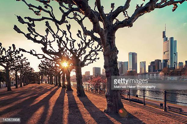 frankfurt afternoon sun - frankfurt main stock pictures, royalty-free photos & images