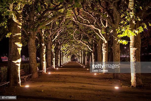 Frankfurt Park Illuminated