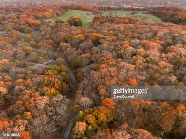 Franklin Park aerial view, autumn oak trees and path