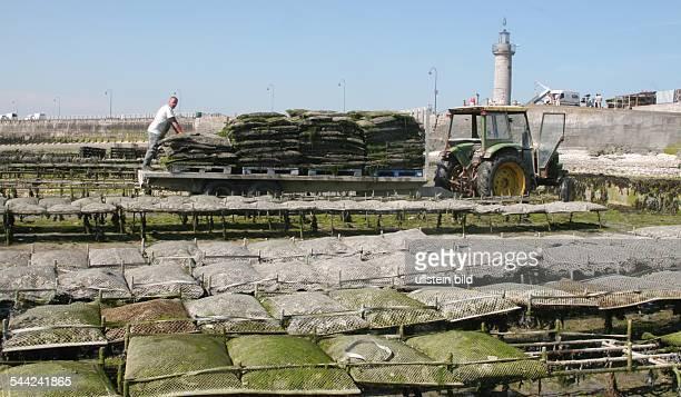 Frankreich Bretagne Cancale Austernernte