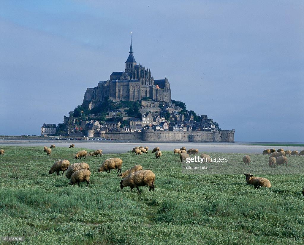 Frankreich Normandie Schwarzkopfschafe Auf Den Marschen Vor Dem News Photo Getty Images