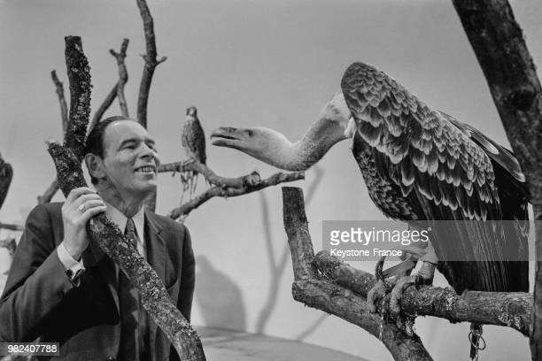 François de La Grange avec un vautour de Rüppel lors de l'enregistrement de l'émission télévisée 'Les animaux du monde' aux studios des...