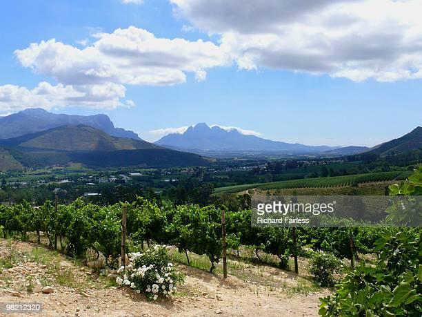 Franschhoek vineyard in South Africa