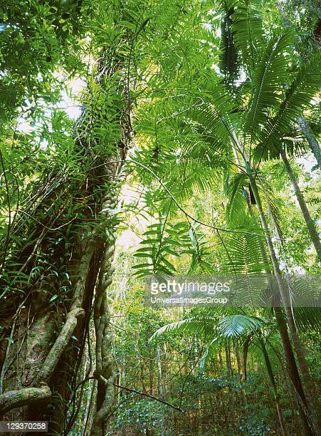 Fraser Island supports dense vegetation and recycles its own dead matter for nutrients