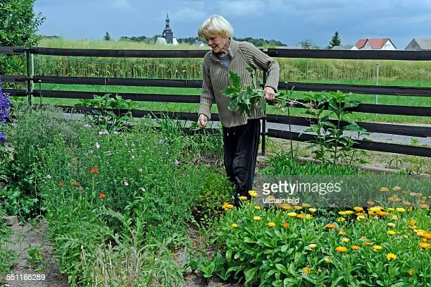 Gartenpflege  Gartenpflege Stock Photos and Pictures | Getty Images