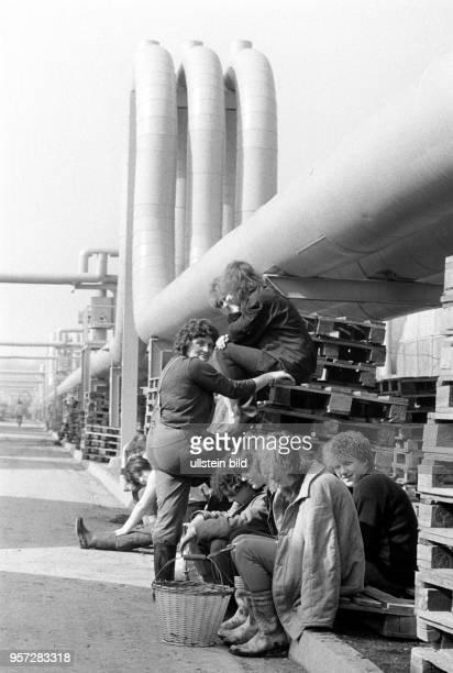 Frauen sitzen unter den Fernwärmerohren die aus dem benachbarten Kohlekraftwerk Vockerode die Wärme in die Gewächshäuser des Volkseigenen Gutes...