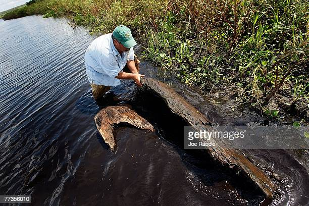 Fred Robbins looks over a large section of a dugout canoe possibly more than 1000 years old found in Lake Trafford October 16 2007 in Immokalee...