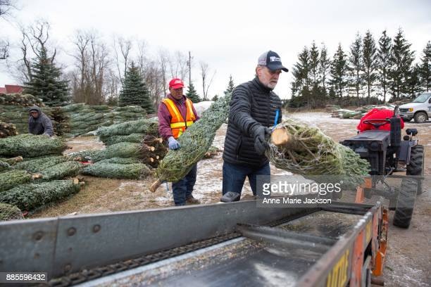Fred Somerville president of Somerville Nurseries Inc in Alliston Ontario moves trees onto a truck for distribution His father John started the...