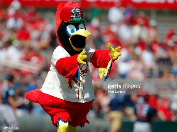 Fredbird mascot of the St Louis Cardinals performs during a spring training baseball game against the Atalanta Braves at Roger Dean Stadium on March...