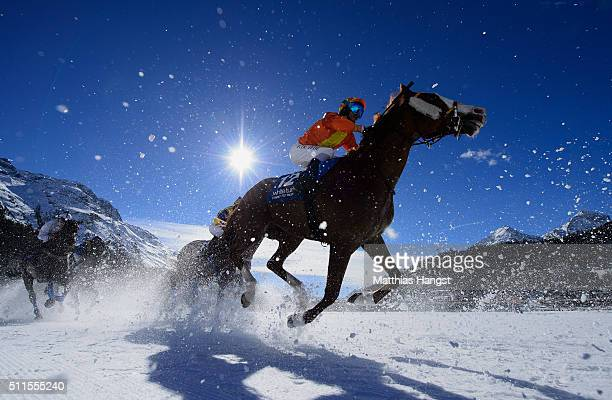 Freddy Di Fede riding Arable competes during the Grosser Preis von St Moritz Flat Race of the White Turf St Moritz on February 21 2016 in St Moritz...