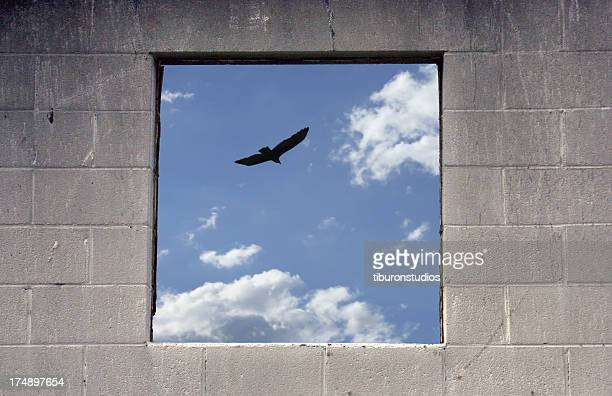 free as a bird - claustrophobia stock photos and pictures