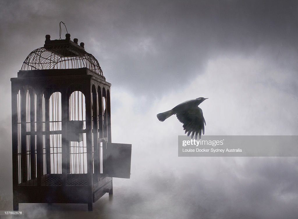 Free Bird : Stock Photo