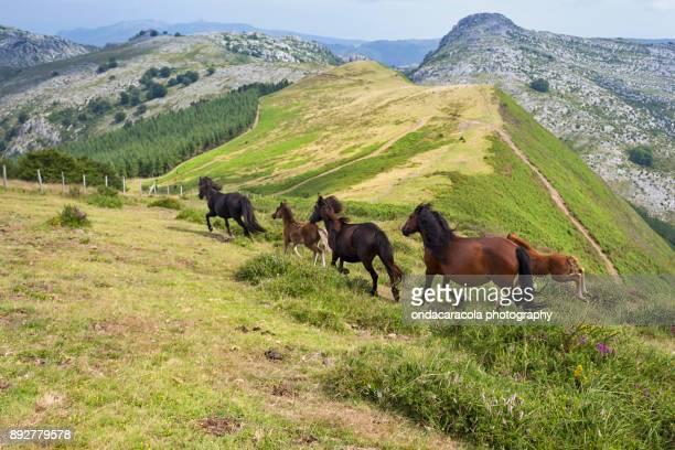 free horses - pais vasco fotografías e imágenes de stock