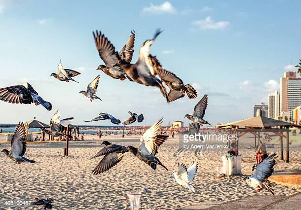 Free pigeons