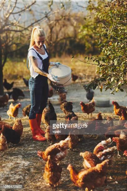 freilandhaltung hühnerfarm - gummistiefel frau stock-fotos und bilder