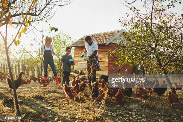 free range chicken farm - chicken coop stock pictures, royalty-free photos & images