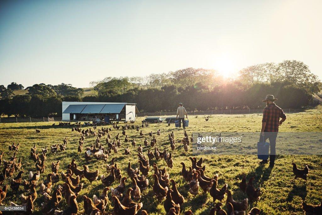 Freilandhaltung Landwirtschaft ist der einzige Weg zu gehen : Stock-Foto