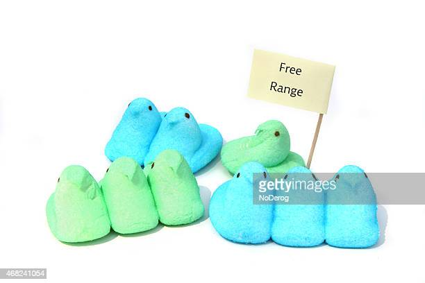 free range peeps easter candy marshmallow chicks - marshmallow peeps stock pictures, royalty-free photos & images
