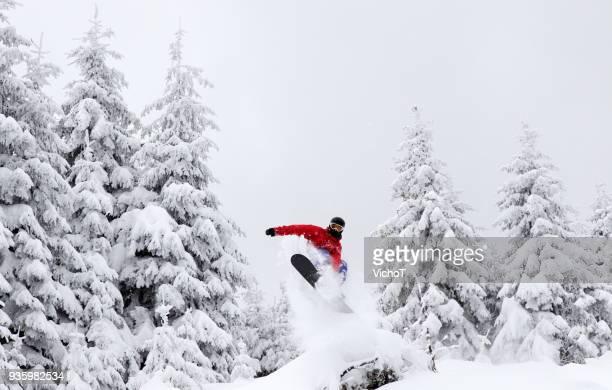gratis snowboarder saltar una almohada entre los árboles nevados - snowboard fotografías e imágenes de stock
