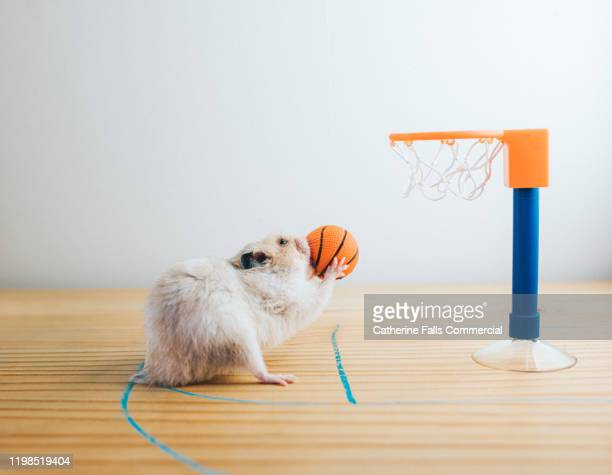 free throw - sports league stock pictures, royalty-free photos & images