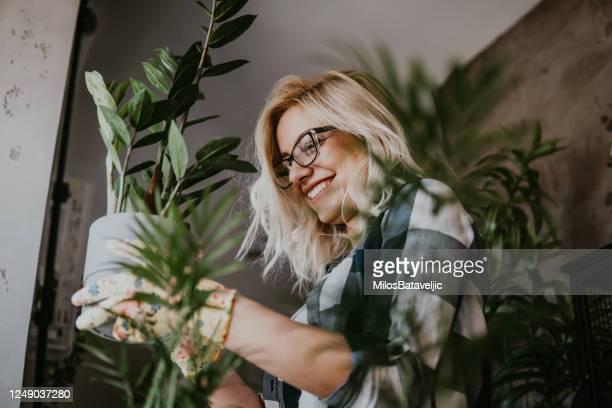 freizeit für kleine hausgärtnerei - zimmerpflanze stock-fotos und bilder