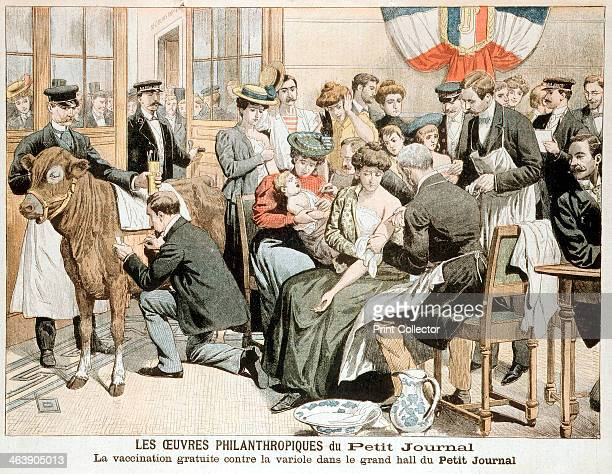 Free vaccination clinic on premises of French newspaper. Heffer has shaven portion of flank infected with Cowpox; serum transferred with stylus to...