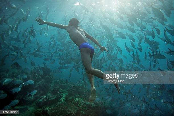 Freediver swims with Jack Fish at Sipidan Island
