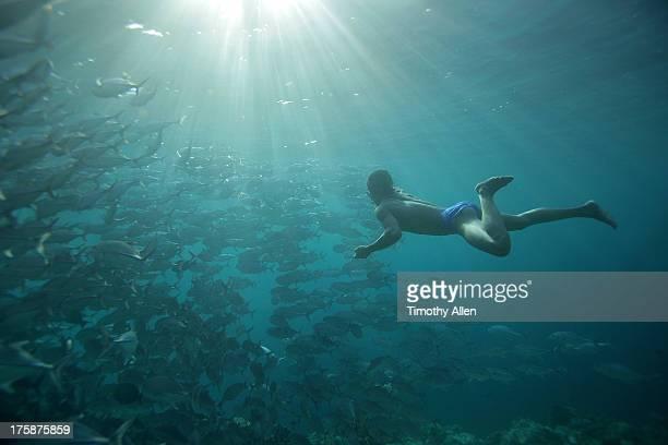 Freediver swims with Jack Fish at Sipidan Island