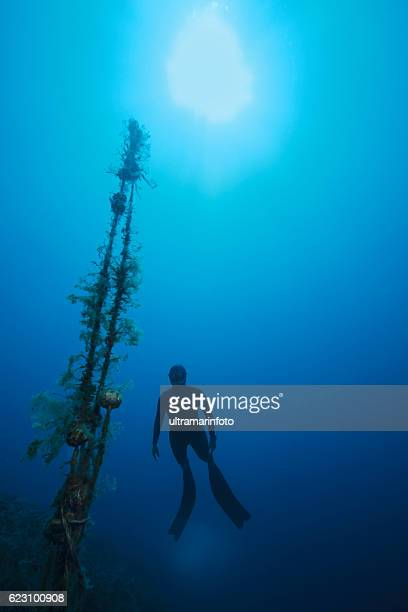 Freediving  Apnea  women snorkeling Underwater diving sea adventure