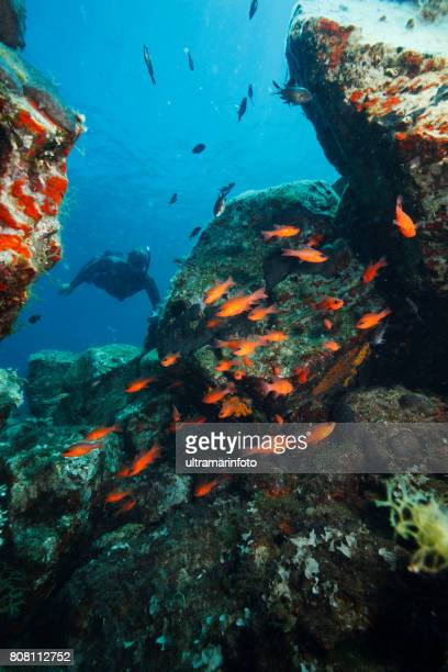 60 Top Mediterranean Fish Pictures, Photos, & Images - Getty Images