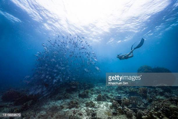 freediving with group of jackfish - underwater film camera stock pictures, royalty-free photos & images