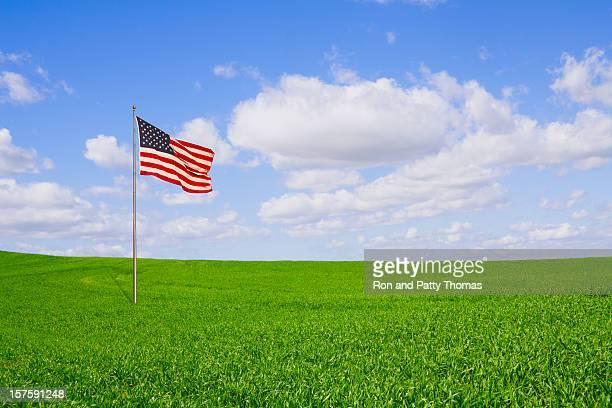 La liberté Field