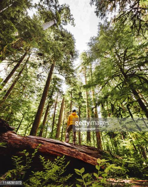 freedom man in the washington state - forest stock pictures, royalty-free photos & images