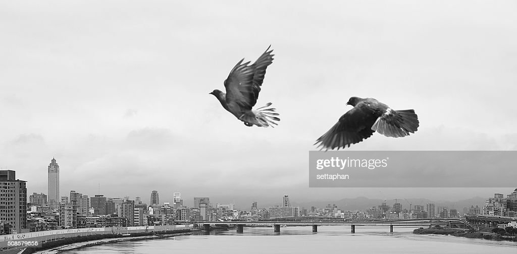 Freedom Movement Flying of Birds on River City : Stock Photo