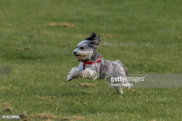 freedom! - cão fraldeiro - fotografias e filmes do acervo