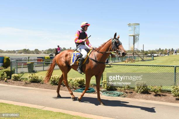 Freedom's Light ridden by Jamie Mott returns after the Warrnambool Tyreplus SV Maiden Highweight Plate at Warrnambool Racecourse on February 07, 2018...