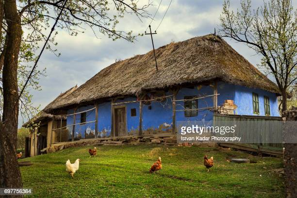 free-run chickens front of a traditional thatched roof blue house in szék, transylvania, romania - siebenbürgen stock-fotos und bilder