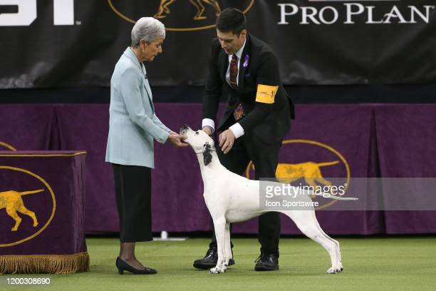 Freesia a Pointer competes in the Sporting Group during the Westminster Dog Show on February 11 2020 at Madison Square Garden in New York NY