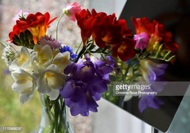 freesias in reflection - freesia stock pictures, royalty-free photos & images